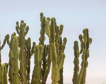 Cactus Print, Cacti Art, Cactus Photo, Minimal Photo, Desert Wall Art, Cacti Decor, Minimalist Art, Desert Photography, Los Angeles Cacti