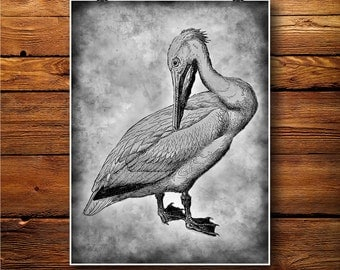 White Pelican Print,   Bird Fowl Poster, old paper print  BW060