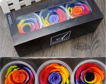 Preserved Fresh Colorful Rose Flower ,Rose Flower DIY ,Dried Colorful Rose for one box