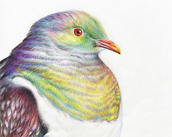 Wood Pidgeon Limited Edition Print
