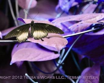 Butterfly in Wonderland digital downloadable art