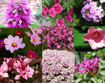 Pretty in Pink Wildflower Mix (400 thru 25,000 seeds) bulk for butterfly ST16