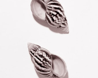 Shell marine fauna Art Photo Still Life  Interiors  Instant Download #8-