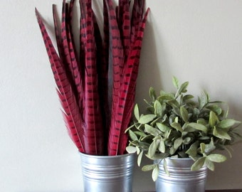 """Red Pheasant Feathers (16-18"""")"""