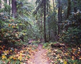 "Insta-Print 4: An Autumn Wood 5""x5"""