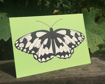 Marbled White butterfly greeting card - blank inside