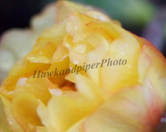 Macro flower prints