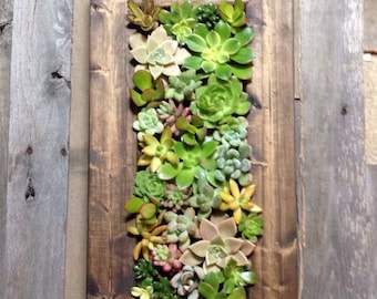 "20""x10"" Living Wall Succulent Planter Vertical Hanging Succulents Garden Art Rustic Wood Frame Valentine's Flower Bouquet Gift"