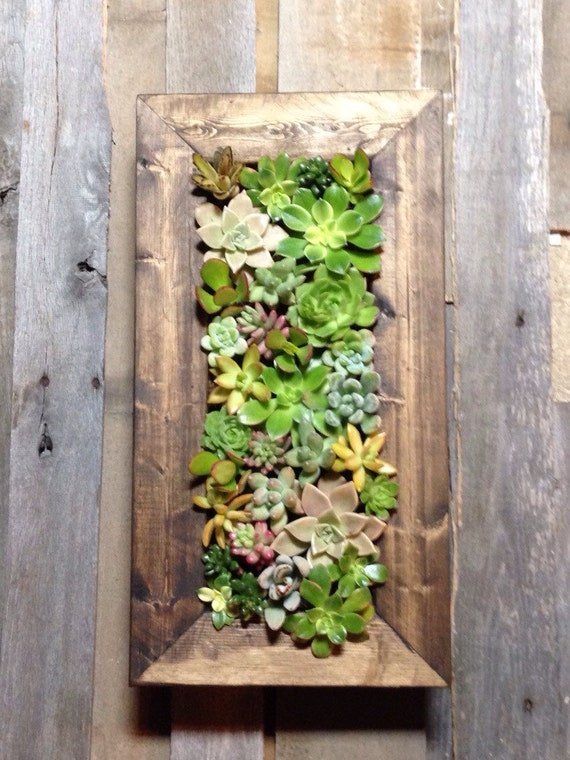 20x10 Living Wall Succulent Planter Vertical Hanging Succulents Garden Art Rustic Wood Frame