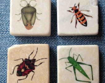 Insects-beetles-grasshopper-wasp 1x1 inch Refrigerator Magnets - Natural Travertine Tile Magnets - Set of 4