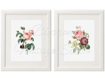 Rose Print Set, Vintage Rose Botanical Prints, Rose Illustrations INSTANT DOWNLOAD Digital Images for Print 5x7, 8x10, 11x14 Included - 1517