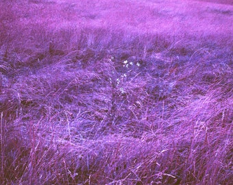 Psychedelic Landscape #6 - Purple Grass