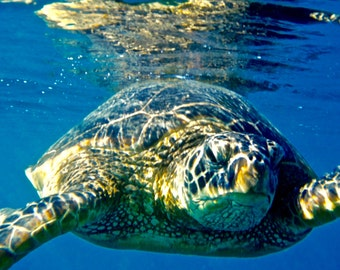 Swimming with the Sea Turtles in Maui