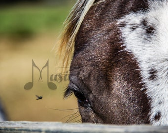 Horse with Fly Picture | Horse Picture | Horse Photography | Horse Wall Art | Equine Photo | Equine Art | Animal Art | Rustic Wall Decor