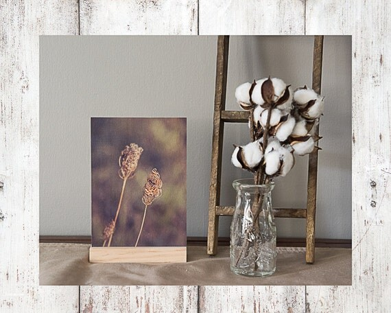 Butterfly Photograph - Wood Print -  Fine Art Photography - Floral Pictures - Home Decor - Desk Shelf or Mantle Vignette - Christmas Gift
