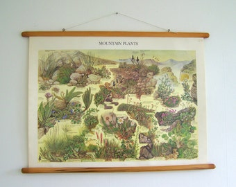 SALE Vintage botanical Art - Old Pull Down Chart - Flower Art - Paper Affiche - Botany art - Botanical Poster -Biology Chart