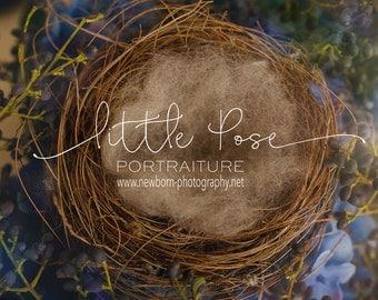 Little Pose ~ Nest Newborn Digital Background High Res jpg file
