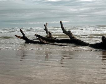 Washed up tree Padre Island Texas  Landscape  Museum Quality Fine Art print or Kodak Endura Lustre