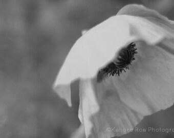 Poppy Photography Print - Black and White