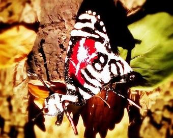Accessoar - butterfly from metal