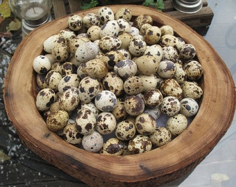 Ready to ship 14 (+ 2 Spares = 16) Blown Quail Eggs w/ 1 Hole. From Happy Free Range Quails!