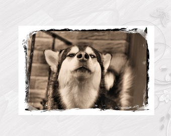 "Post card greeting card ""Alaskan Malamute"" dog - [# GK. 2011.017]"