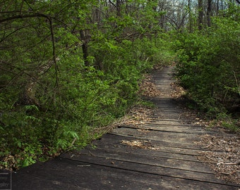Wooden Path Photo Prints - Nature photography Prints