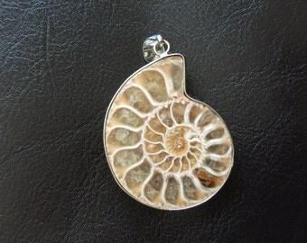 Ammonite Fossil Pendant, Fossil Stone, Ancient Fossilized Sea Creature