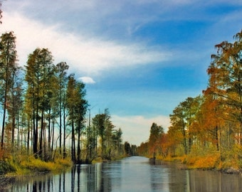 Cypress, Fall Colors, Red Cypress, Okefenokee Swamp, Large Wall Art, River View, Reflections, Trees, Large Artwork, Available on Canvas