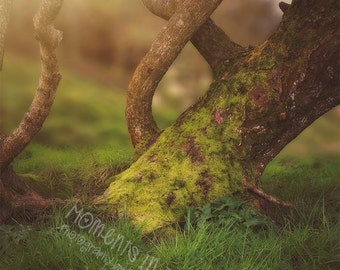 Moments In Time Mossy Tree in the Forest Digital Background