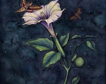 Moonflower - print
