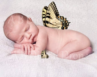 Beautiful Butterfly to add to photos as is or wings!