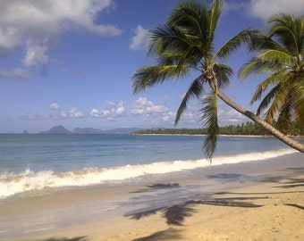 Lot of two photographs... Martinique...
