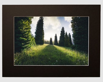 Olinda Tree View Photography Landscape, Matted Print From The Dandenong Ranges Fine Art