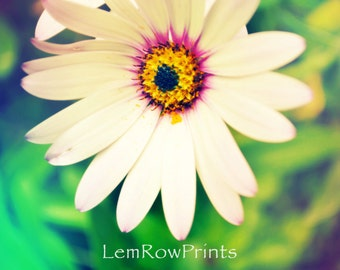 8x10 Colorful Daisy Wooden Standout, Ready to hang Daisy Wall  Art, Flower Photography, Flower Wall Art