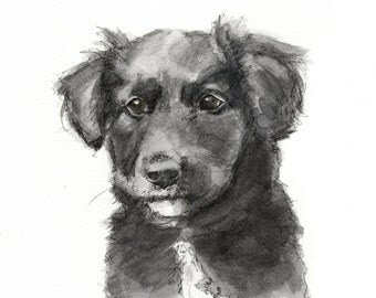 Collie Puppy - Fine Art Print