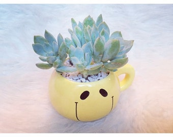 Little smiley face mug-style planter with The Graptoveria Titubans!
