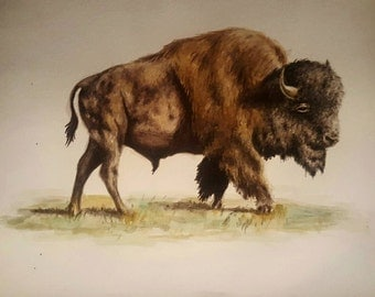Made to Order - American Bison Watercolor