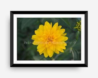 Flower Photograph - Instant Digital Download