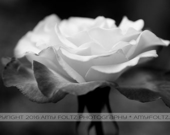 black and white flower photo, fine art photography, wall decor, modern photography, living room decor
