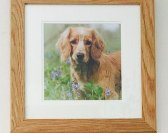 Spaniel in Bluebells - Photographic Print