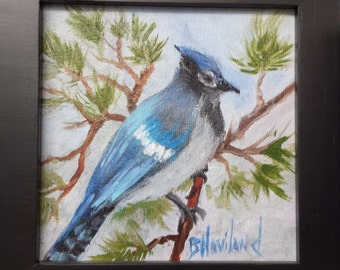 "Miniature oil Painting  ""Blue Jay""   bird feathers Barbara Haviland Texas Artist"