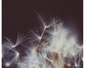 Nature Photography  - Dandelion - Skyward -  Fine Art Photograph - Floral Art - Purple - Minimalist - Oversized Art - Alicia Bock