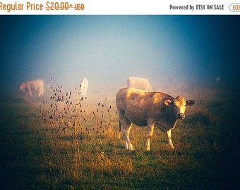 Summer Sale - Cow Photography, Foggy Morning, Rural photography, Fog, Cattle, Livestock, Texas Photography, Fall landscape, pasture, warm co