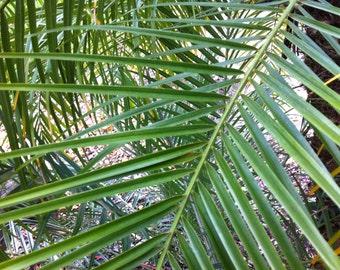 Palm Tree leaves digital download free use