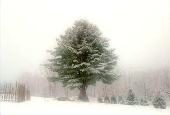 Rustic Decor, Landscape Print, Winter Snow Photograph,  Tree Photography, New England,  Woodland Decor, Winter