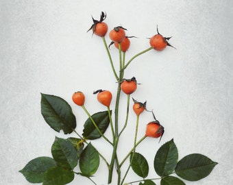 Nature photography orange rose hips nature print botanical still lIfe kitchen decor - Rose Hip Bouquet