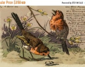 ON SALE Birds, Robin's Busy Day and Beetle with script,1903 antique Instant Download French postcard  FrA167