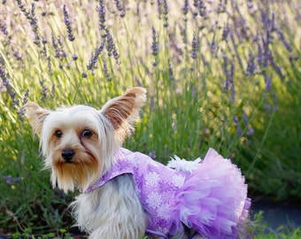 Small Dog Purple Floral Harness Dress