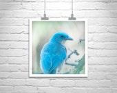 Bird Print, Blue Art, Bird Photography, Fine Art Photograph, Blue Bird, Jay Bird, Turquoise, Lilac, Wildlife Photography, Square Art